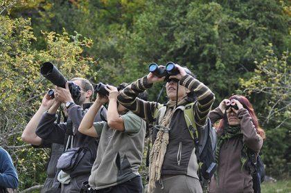 Comunicación en mano,  pájaros volando: claves para el turismo ornitológico